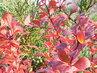 Podzimní barvičky 1