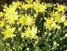 květy 10