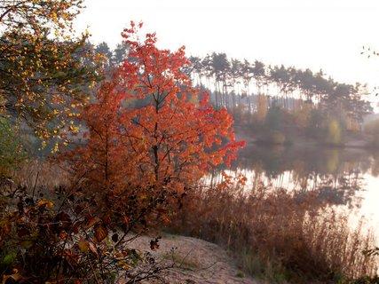 FOTKA - Barevný podzim u vody