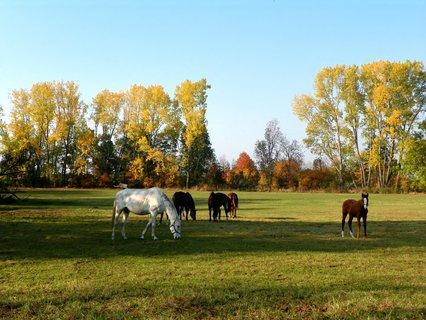 FOTKA - Podzimní pastva