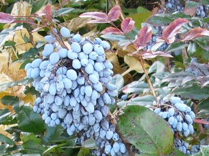 FOTKA - Podzimní barvičky 4