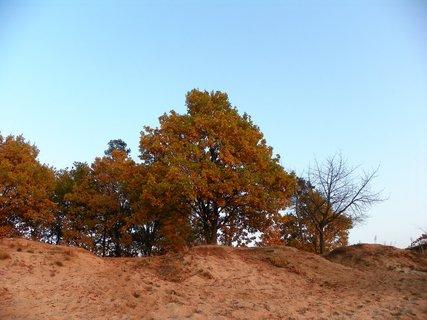 FOTKA - Podzim na Mělicích