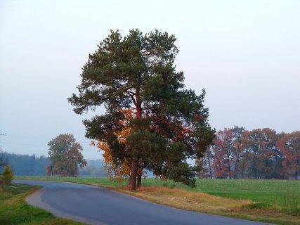 FOTKA - Ovocný s jehličnatým