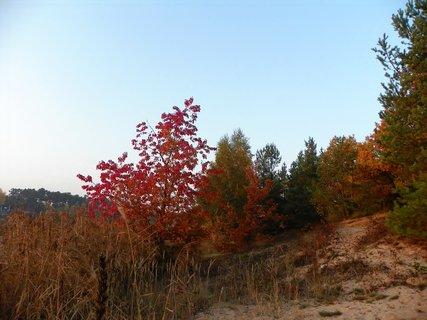 FOTKA - Barvy podzimu u vody