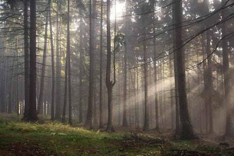 FOTKA - Mlha a slunce v lese