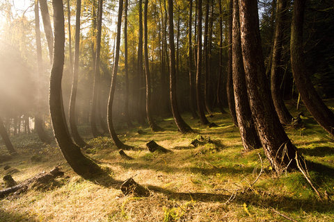 FOTKA - Opilý les v podzimním slunci