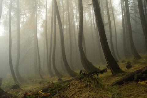 FOTKA - Opilý les v mlze