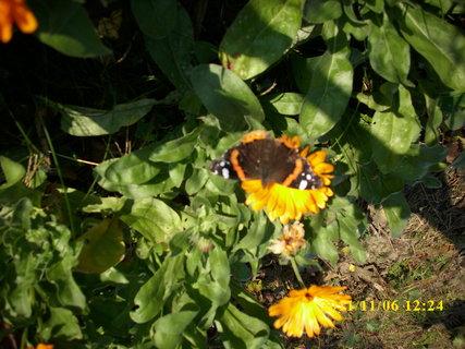 FOTKA - 6.11.2011 na zahradě