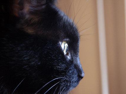 FOTKA - kočky 7