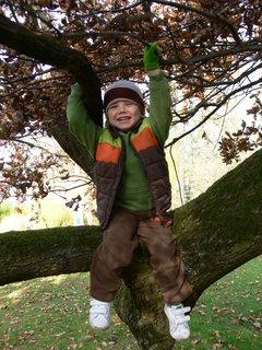 FOTKA - Tomík na stromě..ZOO-Lešná