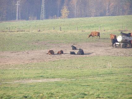 FOTKA - stádo odpočívá
