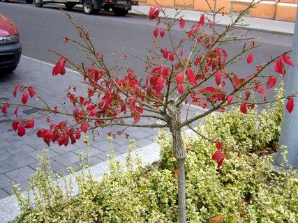 FOTKA - Stromeček se zbarvil