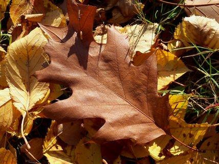 FOTKA - Slunečný  podzimní den