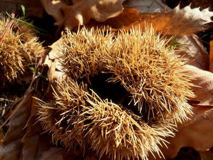 FOTKA - Ne není to ježek :-)