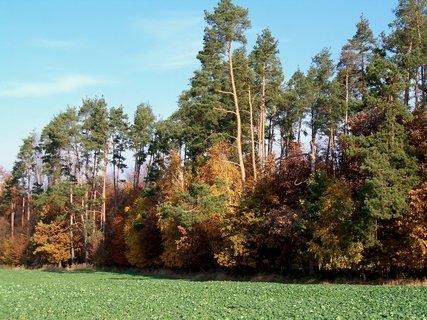 FOTKA - Listopadové barvy