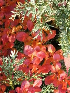 FOTKA - Podzimek 3