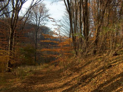 FOTKA - cesta lesom