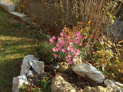 FOTKA - jesenné kvety
