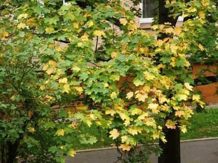FOTKA - Podzimní barvení