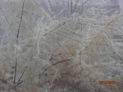 FOTKA - Mlha a námraza 15..11.