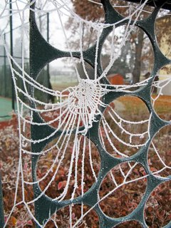FOTKA - pavučina ojíněná dnešní inverzí