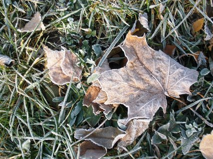 FOTKA - Listí v trávě