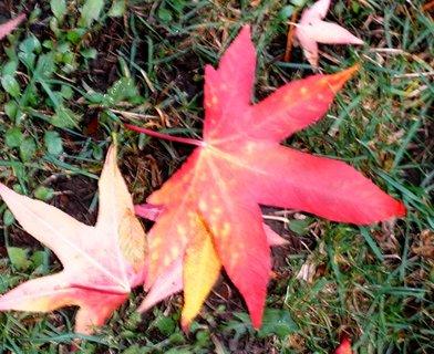 FOTKA - Pěkně zbarvený list