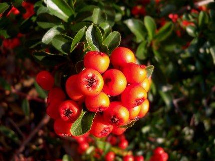FOTKA - Pozitivní podzimní barvy