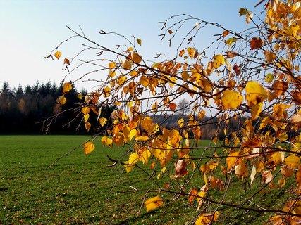 FOTKA - Zlatavé lístky podzimu