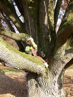 FOTKA - .Zoo-mega strom...:)