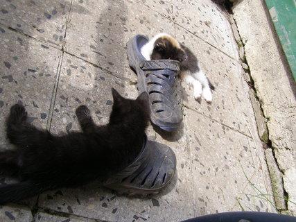 FOTKA - bota jako pelíšek