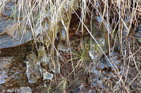 FOTKA - Zmrzlá voda v  lesním potůčku