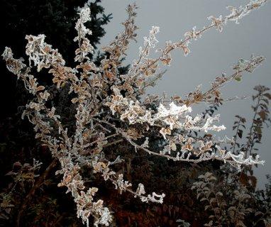 FOTKA - Bílý stromeček