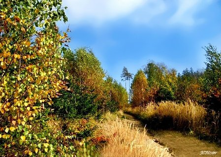 FOTKA - v podzimní přírodě