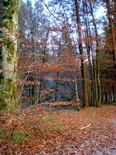 FOTKA - Podzimní procházka - Stoissengraben 4