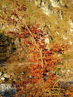 FOTKA - Podzimní procházka - Stoissengraben 9