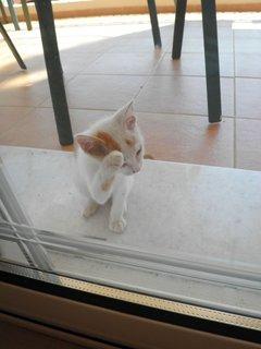 FOTKA - Kočka 9