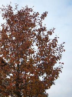 FOTKA - Strom na podzim