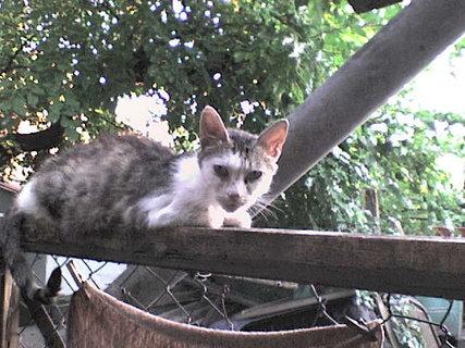 FOTKA - kočky zuzana