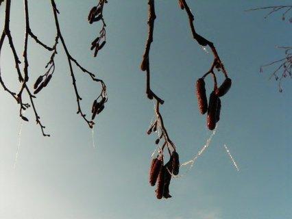 FOTKA - I stromy nosí náhrdelníky