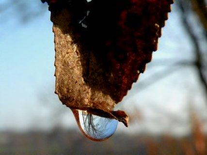 FOTKA - Zrcadlení na listu