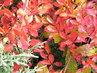 Další podzimní barvičky 4