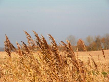 FOTKA - Podzim v polích