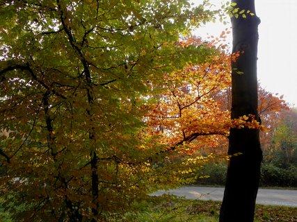FOTKA - Slunce ve větvích