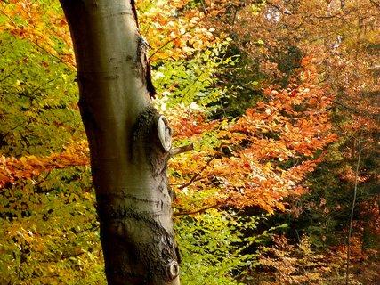 FOTKA - Barvy v lese