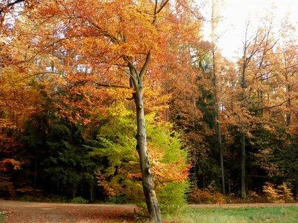 FOTKA - Lesní kontrasty