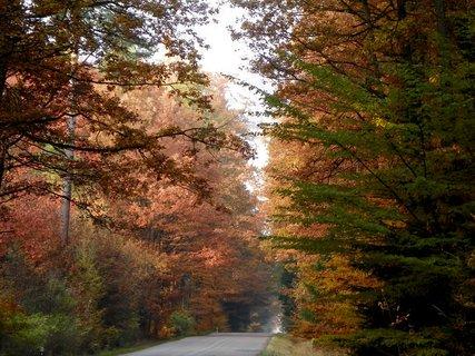 FOTKA - Silnice lemovaná podzimem