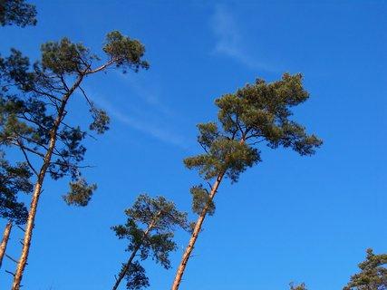 FOTKA - Nedělní modré nebe nad hlavou