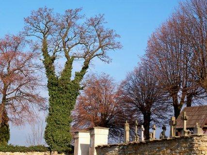 FOTKA - Strom v zimním kabátku