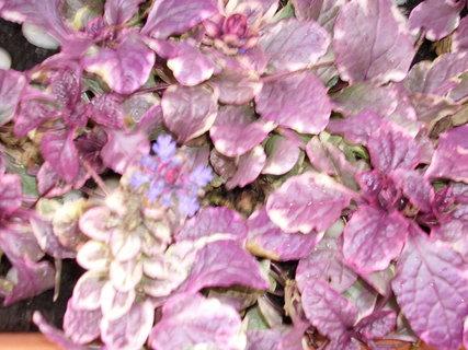 FOTKA - Další podzimní barvičky 2
